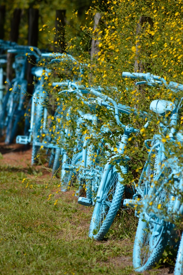 A line of blue bikes along a fence