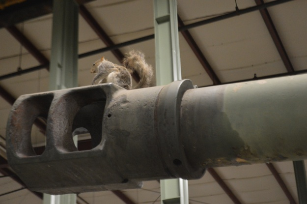 Squirrel On Tank