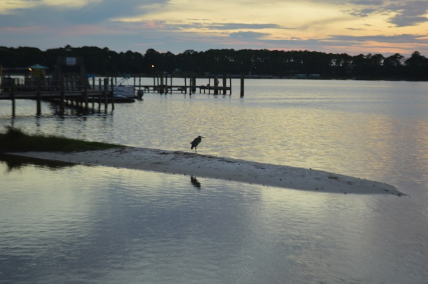 Bird on sand bar